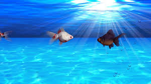 Fish Backgrounds Fish Background 65 Images