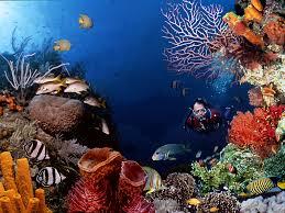 مناظر البحر
