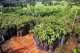 Фруктовые деревья и кустарники в саду