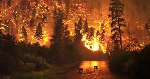 Image result for forest fires washington