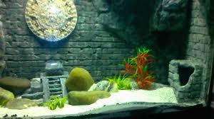 Paper Mache In Aquarium Background Freshwater Aquarium Live