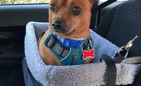 top 10 best dog car seats autoguide com