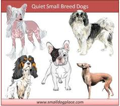 quiet small breed dogs graphic
