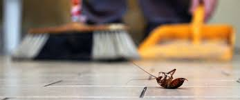 22 Natural Pest Control Methods To Rid Your Home Of Creepy Crawlies