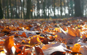 Wallpaper Nature, Autumn, Mood, Foliage ...