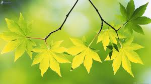 Resultado de imagen para hojas verdes