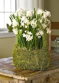White Paper Flower Bulbs Paper White Bulbs Giants Paperwhite Reuse Flower In Water