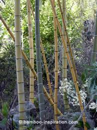 Small Picture Bamboo Garden Ideas