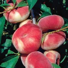 stark saturn peach