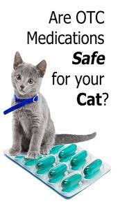Are Otc Medications Safe For Your Cat Cat Health Pinterest