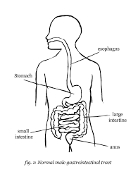 Stomach diagram black and white wiring diagram u2022 rh ebode co 1978 firebird wiring diagram 1970 camaro wiring diagram