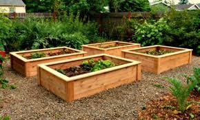 raised garden bed wood type how to build raised vegetable garden beds