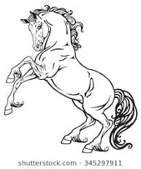 rearing horses drawings. Fine Rearing Rearing Horse Black And White Outline Image Intended Rearing Horses Drawings W