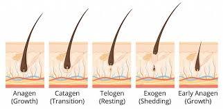 stress hair loss anderson