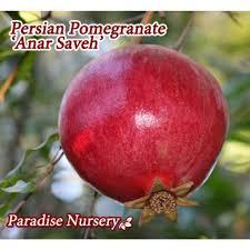 853 Best Exotic Fruit Images On Pinterest  Exotic Fruit Fruit Iranian Fruit Trees