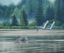 swans painting swans on carter lake by ruth gee