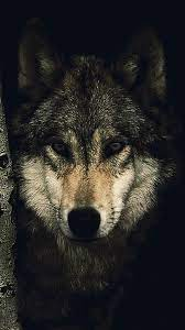60+ Wolf Wallpapers: HD, 4K, 5K for PC ...