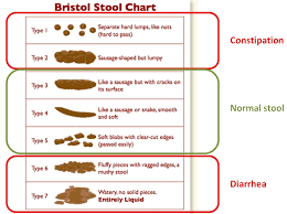 Bristol Stool Chart Diarrhea What Are The Symptoms Of Ibs Ibs Fact Ibs Fact
