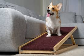 Wer mit dem bohrer umgehen kann, macht sich seine hunderampe ganz einfach selbst. Hunderampe Test Empfehlungen 12 20 Diehaustierprofis