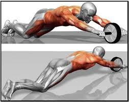 Упражнение ролик для пресса Изучаем все тонкости и секреты  Упражнение ролик для пресса мышцы