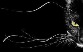 cats wallpaper beautiful cat black