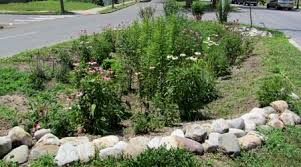 Small Picture UConn Rain Gardens How To Guide