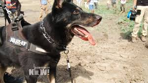 Image result for dog attacks AND protests