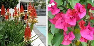 hardy plants for outdoor pots flower