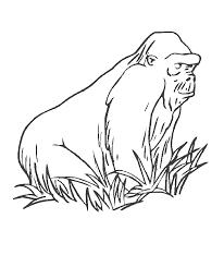 Bokito De Gorilla Kleurplaat Jouwkleurplaten