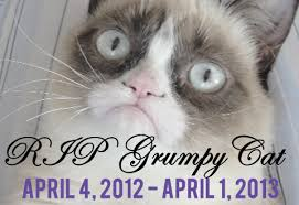 grumpy cat i had a birthday once. Modren Grumpy SourceFed Video Reports U0027Grumpy Cat Has Diedu0027 Life No Longer Meaning   New Media Rockstars Intended Grumpy I Had A Birthday Once