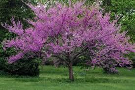10 por flowering trees lovetoknow