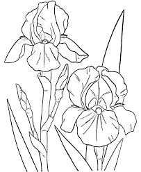 Spring Coloring Pages Spring Flowers Free Printable Coloring Pages
