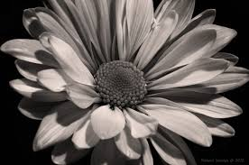 black and white photography with color flowers.  And Throughout Black And White Photography With Color Flowers C