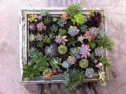 diy framed succulent garden you can hang on any wall via shelterness