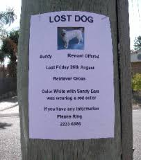 how to make lost dog flyers how to find a lost dog or puppy