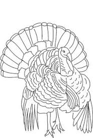wild turkey clipart black and white. Perfect Black Turkey Clip Art Realistic Animal Coloring Pages Printables Vector Free  Download With Wild Clipart Black And White G