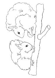 Kleurplaat Eekhoorntjes Kopen Zippytoys