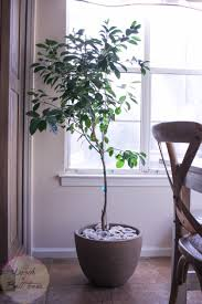 5 minute decor idea geodes indoor plants woods of bell trees add to the top soil amazing office plants