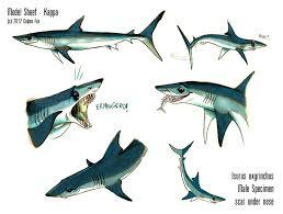 mako shark drawing.  Mako Shortfin Mako Shark  Sheet Kappa By CulpeoFox  In Drawing