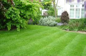 Kitchen Gardening Tips Growing Maintaining A Healthy Grass Lawn Acegardener Tips To