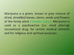 reasons why marijuana should not be legalized essay