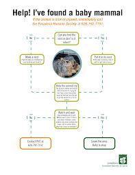 Help Ive Found A Baby Mammal Pasadena Humane Society Spca