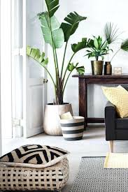 plants feng shui home layout plants. Surprising Plants For Living Room Easy Designs Feng Shui Home Layout