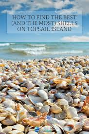 How To Find The Best And The Most Shells On Topsail Island