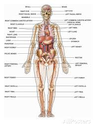 Human Body Labeled Inside The Human Body Labeled Anatomy