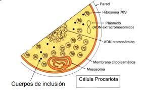 Los diferentes organismos modelo. Capítulo 3: bacterias – Ecotoxsan