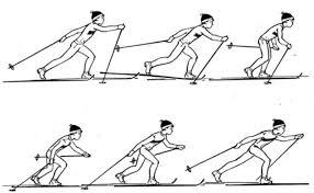 Виды ходов на лыжах для уроков по лыжной подготовке Попеременный двухшажный ход