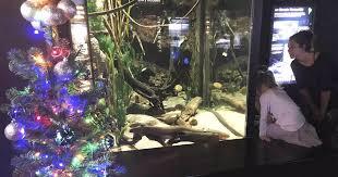 Nbc News Christmas Lights Electric Eel Powers Tennessee Aquariums Christmas Lights