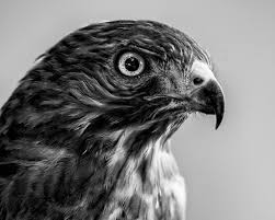 black and white animal photography. Contemporary And Inside Black And White Animal Photography O