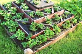 a square foot garden gardening spacing template square foot gardening